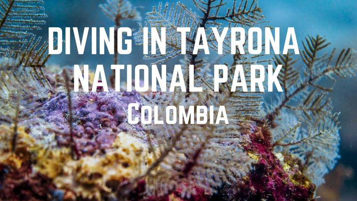 Diving in Tayrona National Park, Colombia