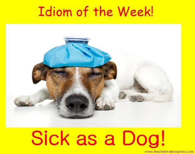 Sick As A Dog Sick Idioms Dogs