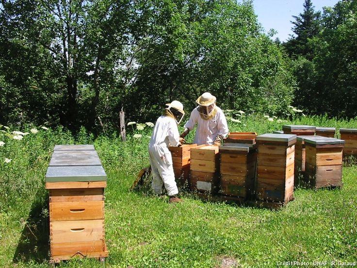 Tout ce qu'il faut faire en septembre pour s'occuper de ses ruches et prendre soin des abeilles.
