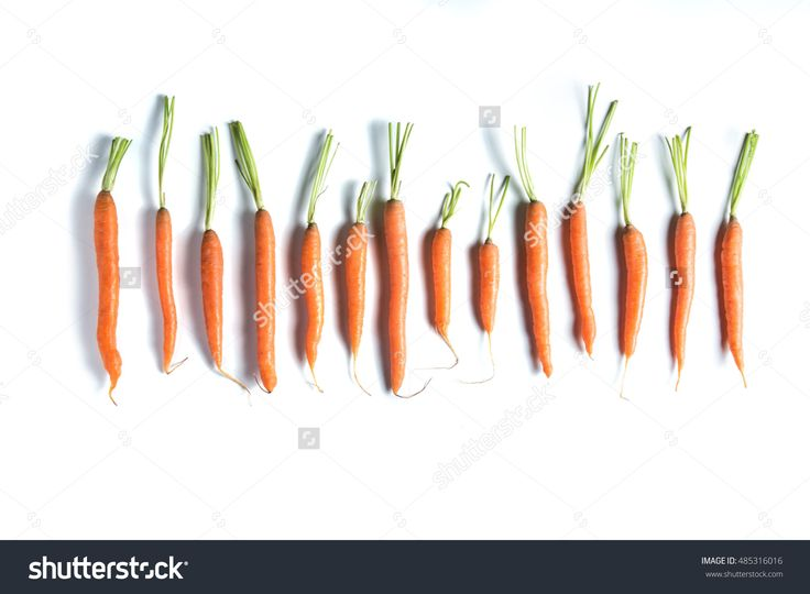 Fresh Carrots Of Different Sizes And Shapes In Row Isolated On White Background Top View. Banner And Copy Space For Text. Web-Design Studio Shot. Concept Of Healthy Lifestyle And Differences. Stock Photo 485316016 : Shutterstock