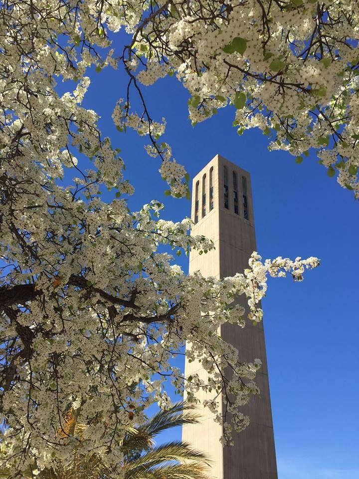 storke tower ucsb uc santa barbara - Uc Santa Barbara Halloween