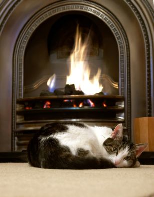 44 Best Hearth Cats Images On Pinterest Cats Fire And