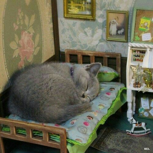 in kitty's room