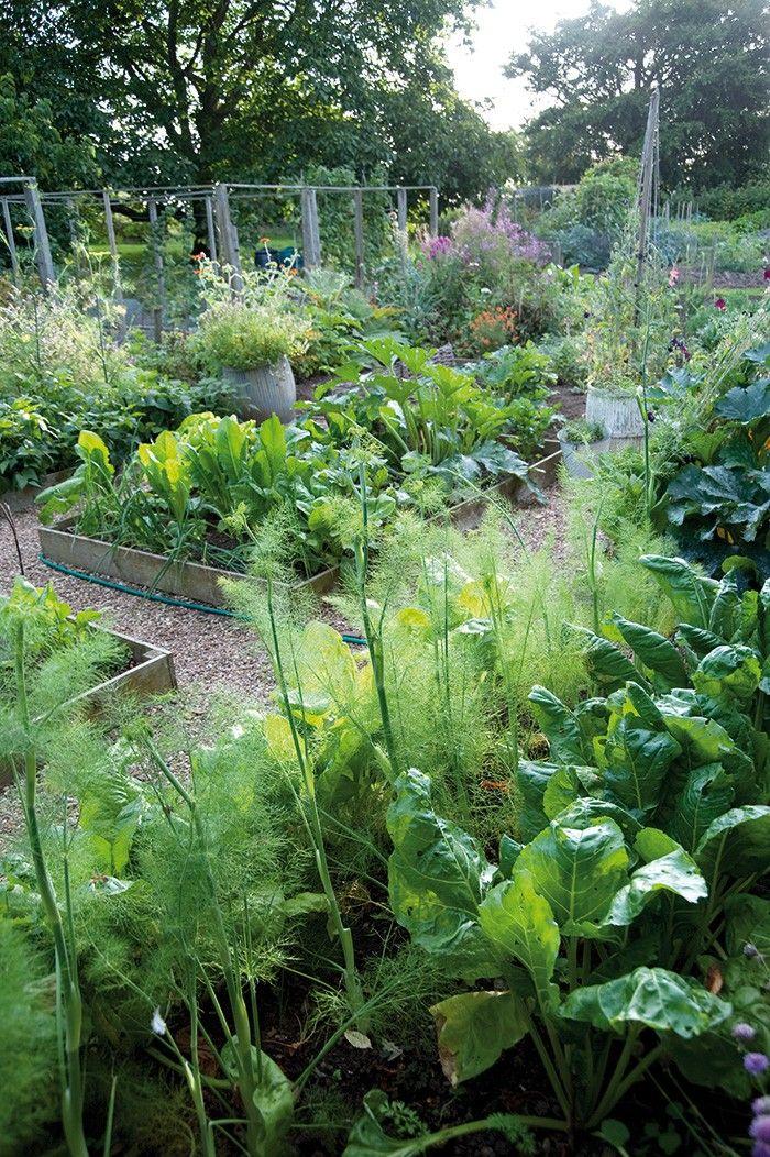 Virginia Woolf's Garden, photos by Caroline Arber. GardenistaGardens Ideas, Woolf Gardens, Virginia Woolf, Raised Beds, Caroline Arbers, Vegetables Gardens, Beautiful Gardens, Monk House, Backyards Gardens