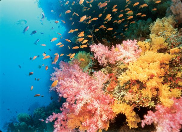 A thriving Coral Reef in Fiji in Coral Reef Adventure at Ontario Science Centre, photo courtesy Ontario Science Centre