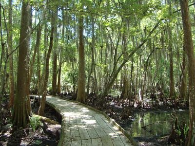 Free Things to Do in New Orleans - boardwalk through Cyprus swamps