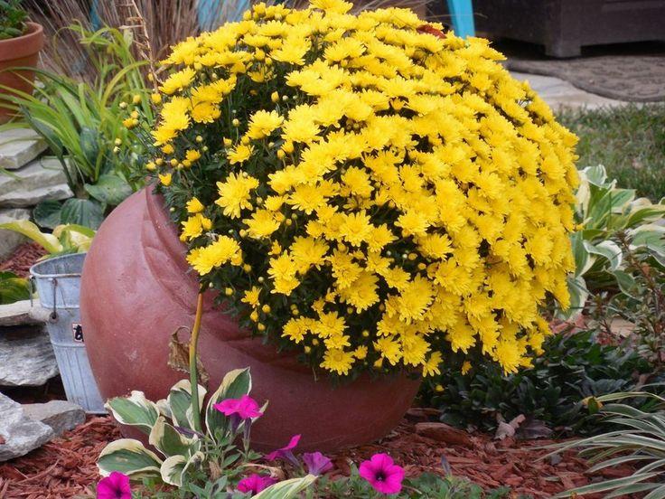 No inviertas en decoración, invierte en plantas (y 30 imágenes que demuestran por qué) | Plantas