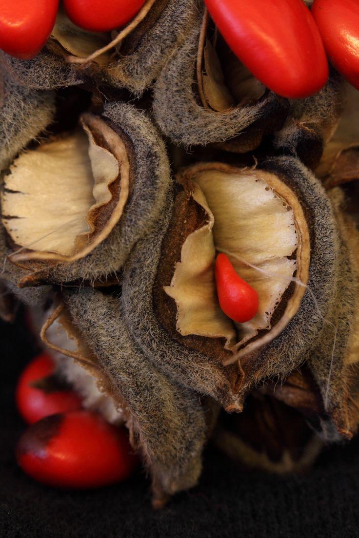 Magnolia Seed Pod by Joshua Szulecki