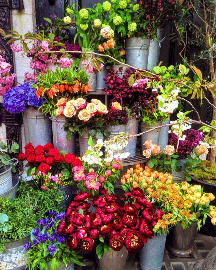 Can I have all these flowers