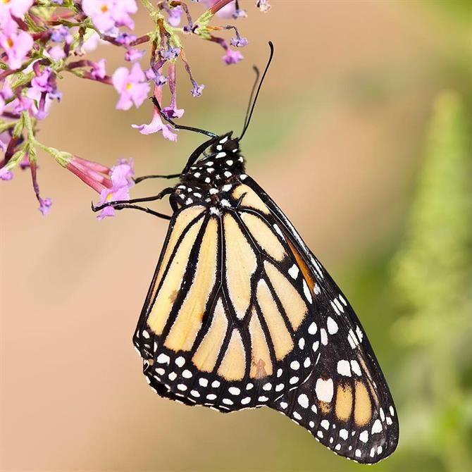 Parc aux Papillons de Benalmadena, Malaga - Costa del Sol (Espagne)