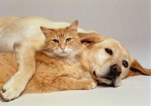 What You Should Know About Kidney Disease in Dogs and Cats: Symptoms of Kidney Failure in Dogs and Cats