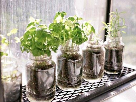 Mason Jar Herb Gardens   weEATny