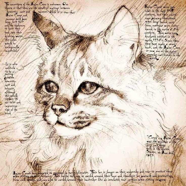 35 best sketches Leonado Da Vinci images on Pinterest | Italian ...