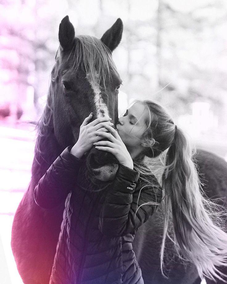 картинки с лошадью на аву