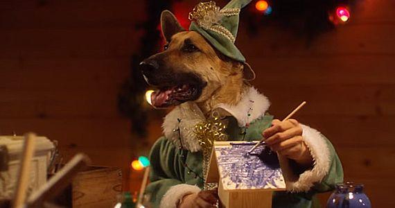 Hilarante vidéo d'animaux lutins du Père Noël.  http://rienquedugratuit.ca/videos/hilarante-video-danimaux-lutins-du-pere-noel/