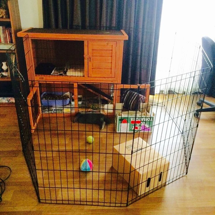 25 best ideas about rabbit playpen on pinterest indoor for How to make a rabbit hutch from scratch