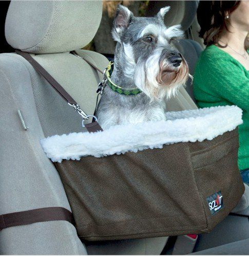 buckle that belt why you need a dog car seat top dog tips
