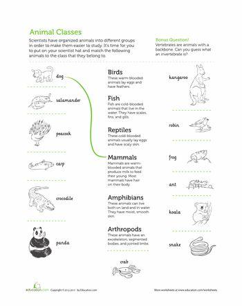 25+ bsta Vertebrates and invertebrates iderna p