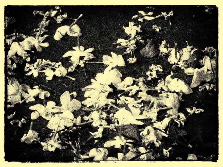 Believe me! Dozens of flowers fall, every day in my backyard.