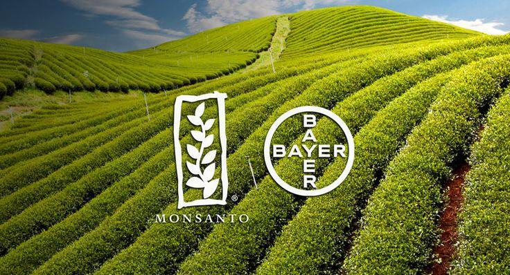 Bayer compra Monsanto para dominar el mercado agrícola mundial