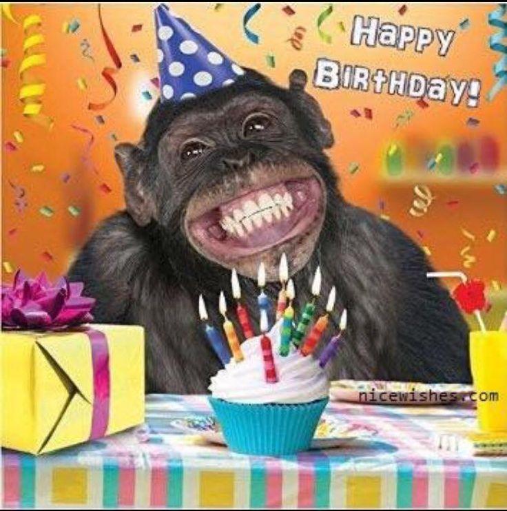 Открытка на день рождения от обезьяны