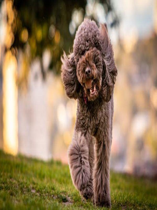 Dog Massage Tips Beautiful Dogs Dog Spay Dog Care Tips