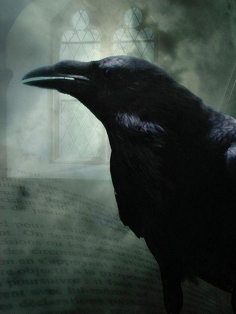 Edgar Allen Poe - The Raven