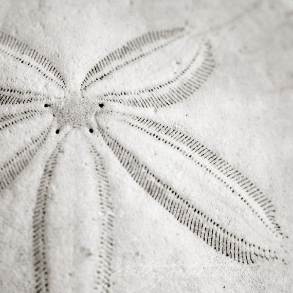 Sand dollar: Ocean Colors, Nautical Stars, Colors Photography, Black And White Beaches Photo, Art Photographers, Fine Art, Black White, Beaches Art, Sands Dollar