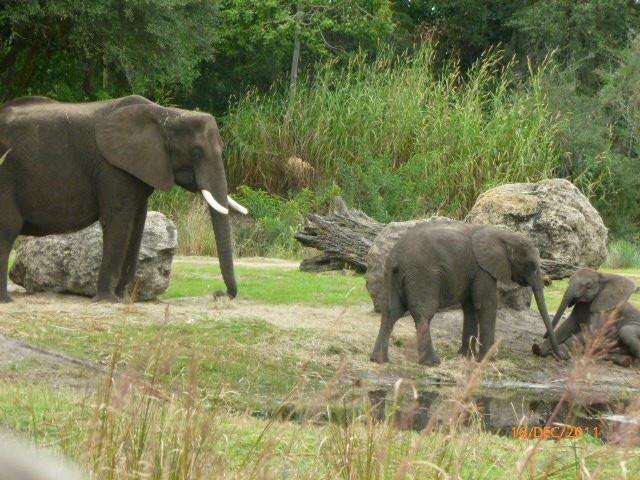 Image result for disney animal kingdom elephants pinterest