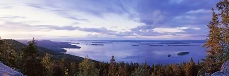 Photographic Print: Trees Along a Lake, Lake Pieli…