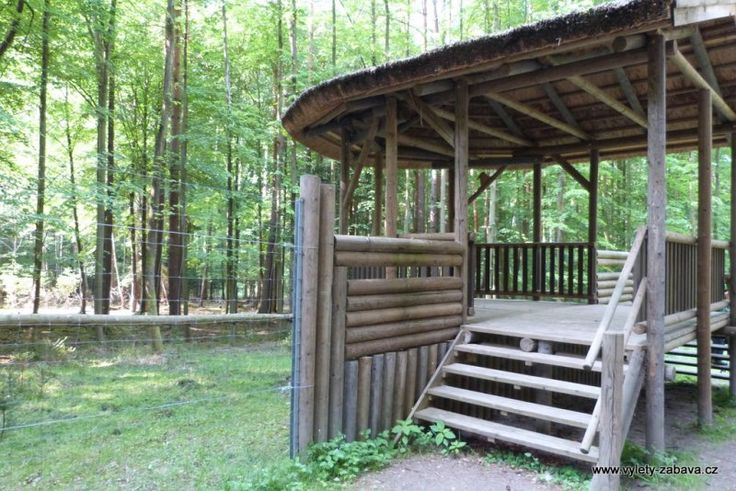 Lesopark Pintovka - Tábor - zookoutek