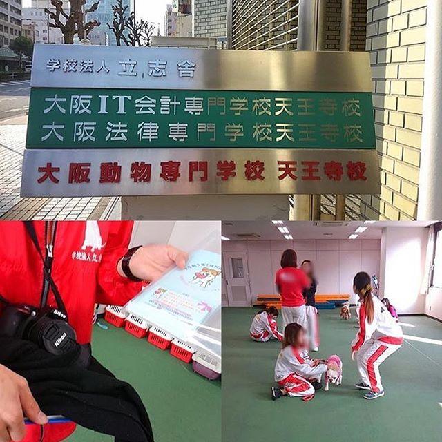 🐕💫 @koharu20161112  さんがパンフレットを 大阪動物専門学校 天王寺校さんに置いて下さり、素敵な記事にして下さいましたので、ご紹介のリポストをさせて頂きます😃💕✨ 本当にありがとうございました😊✨ ーーーーーーーーーーー @hogoken_wanko さん作成の#保護犬のわんこプロジェクト のパンフレットを大阪動物専門学校 天王寺校さんに置いて頂けました。 ドッグトレーナーさんやトリマーさんや色々な動物の事を学ばれている学生さん達😊 これから保護犬と接する機会もあると思います。また保護犬を知って頂くきっかけになるかもしれません😊 家のワンも学生さんの実習犬としてお世話になっております。 ご協力どうもありがとうございました💝 #保護犬#保護犬のわんこプロジェクト #大阪動物専門学校天王寺校 . . #元保護犬  #雑種犬 #繁殖犬 #里親  #犬 #愛犬 #rescueddog  #adopteddog #保護犬のわんこ写真集  #保護犬のわんこかるた  #保護犬のわんこスタンプ  #今週の保護犬のわんこ