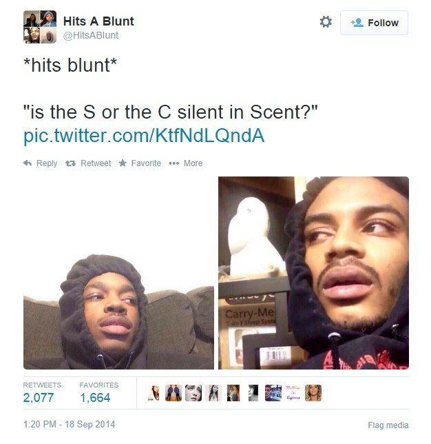 eb076363d67f135da51ae74547acb5fa stoner questions greatest hits 150 best *hits blunt* images on pinterest ha ha, funny stuff and