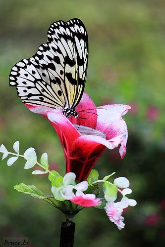 butterfly nectaring...