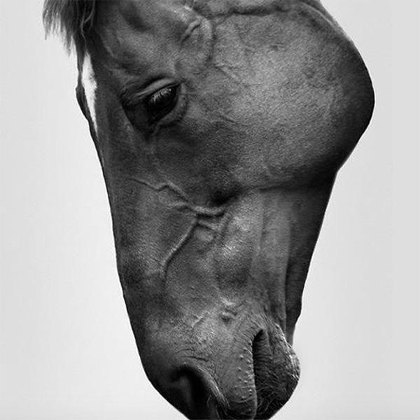 The Horse - Sarah McColgan