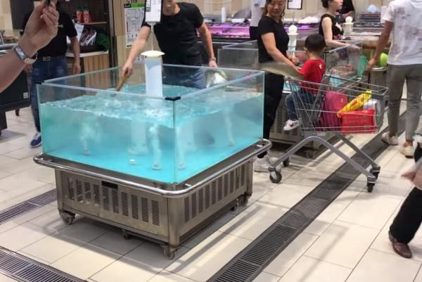 Fish jumps out of tank and into grocery shopper's cart