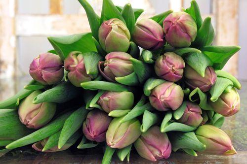 Tulpan Tulips Margarita http://holmsundsblommor.blogspot.se/2014/02/tulpaner.html