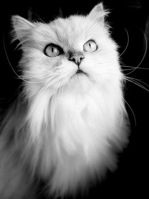 Pushka in Black and White...Again