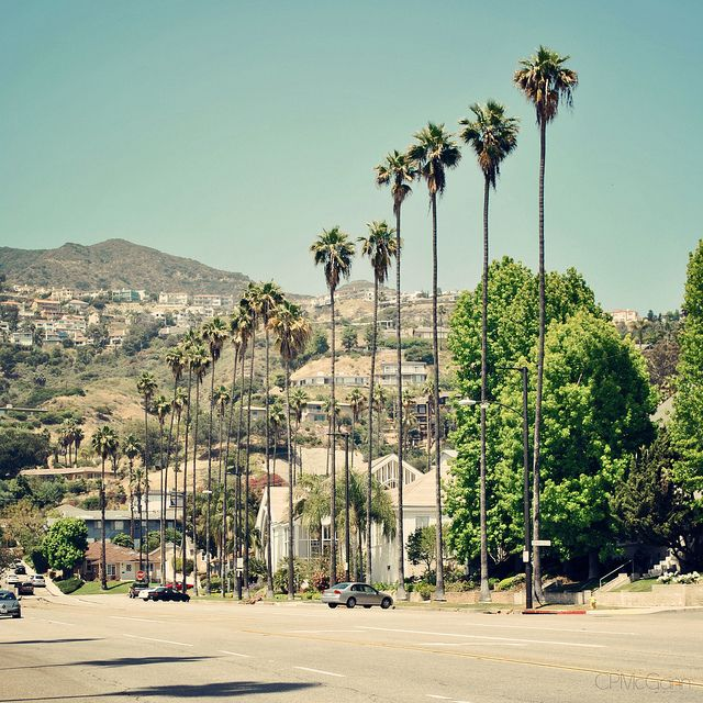 Lifestyles | Glendale, CA | Brand Blvd. Palm Trees & Verdugo Hills by CPMcGann, via Flickr