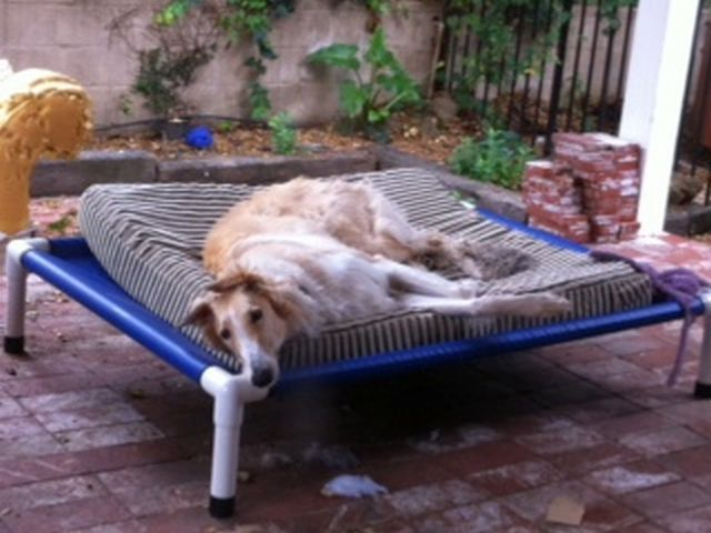 Outdoor Dog Bed Dog Cot Raised Bed PVC Dog by DianesK9Creations, $114.95