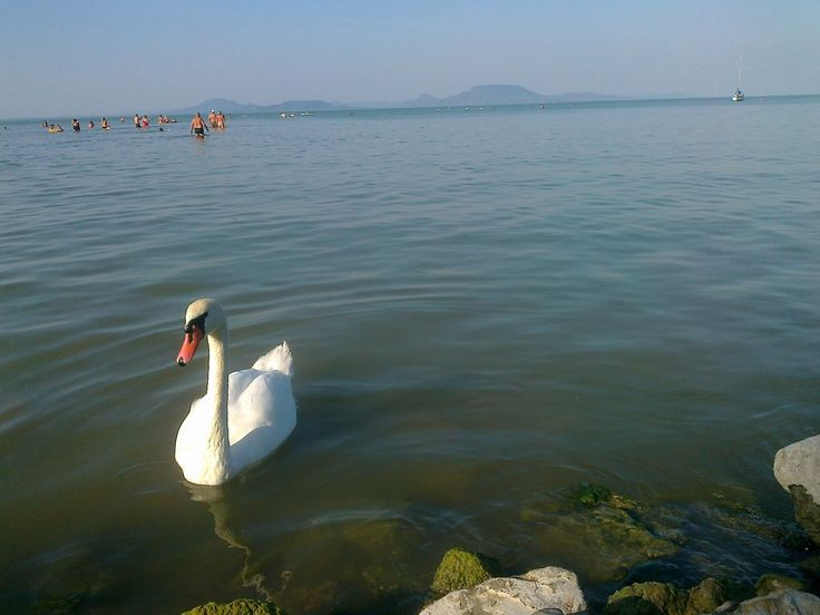 Balatoni nyár - Summer in Hungary, near the Lake Balaton - Balatonmáriafürdő (photo by Bence)