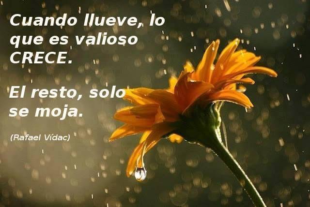 〽️Cuando llueve lo que es valioso CRECE. El resto solo se moja Rafael Vidac