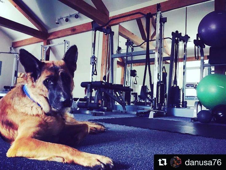 #BodySolid is dog approved!  #Repost @danusa76 (@get_repost)  Kairo #gsd#gsdshowline #gsdofinstagram #germanshepherd #vlciak#nemeckyovcak #nemeckyovciak #dog#instagood #instadog #dogoftheday #dogphotography #photography #photooftheday #picoftheday #pictureperfect #pes#slovakdog #gym#mygym#bestbreed #bestcompany #bodysolid #fitness#fitko#fitnessaddict