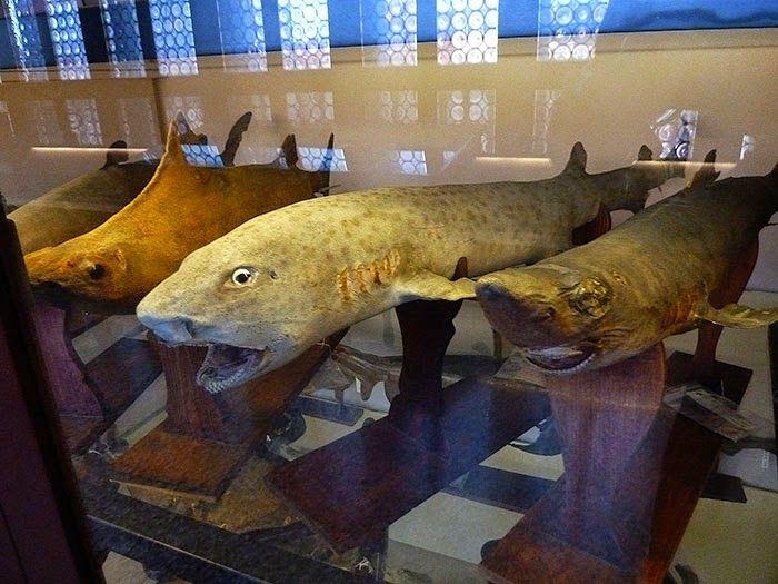 Raccogliere per stupire, raccogliere per studiare, corridoio ottocentesco , Museo Storia Naturale, Venezia