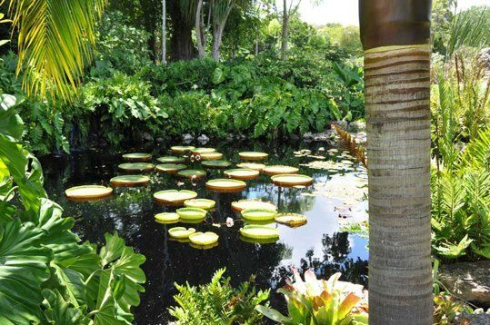 Best of the Best: 10 Gardens to Visit Across the United States - Fairchild Tropical Botanic Gardens, Coral Gables, FL