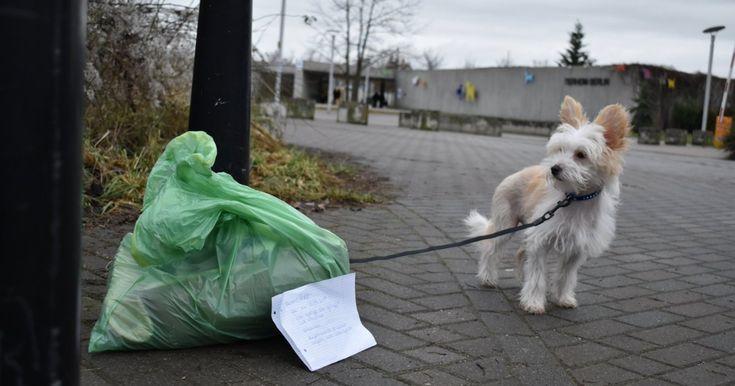 Mit einem traurigen Zettel wurde Eddi in Berlin ausgesetzt