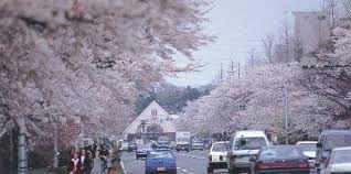「国立駅 桜並木」の画像検索結果
