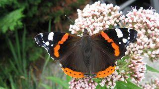 quilts van kippetje en méér.....: vlinders