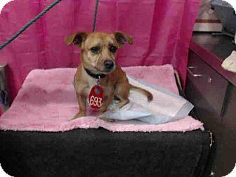 San Bernardino Search And Rescue Dogs