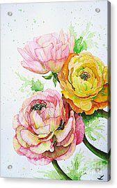 Ranunculus Flowers Acrylic Print by Zaira Dzhaubaeva